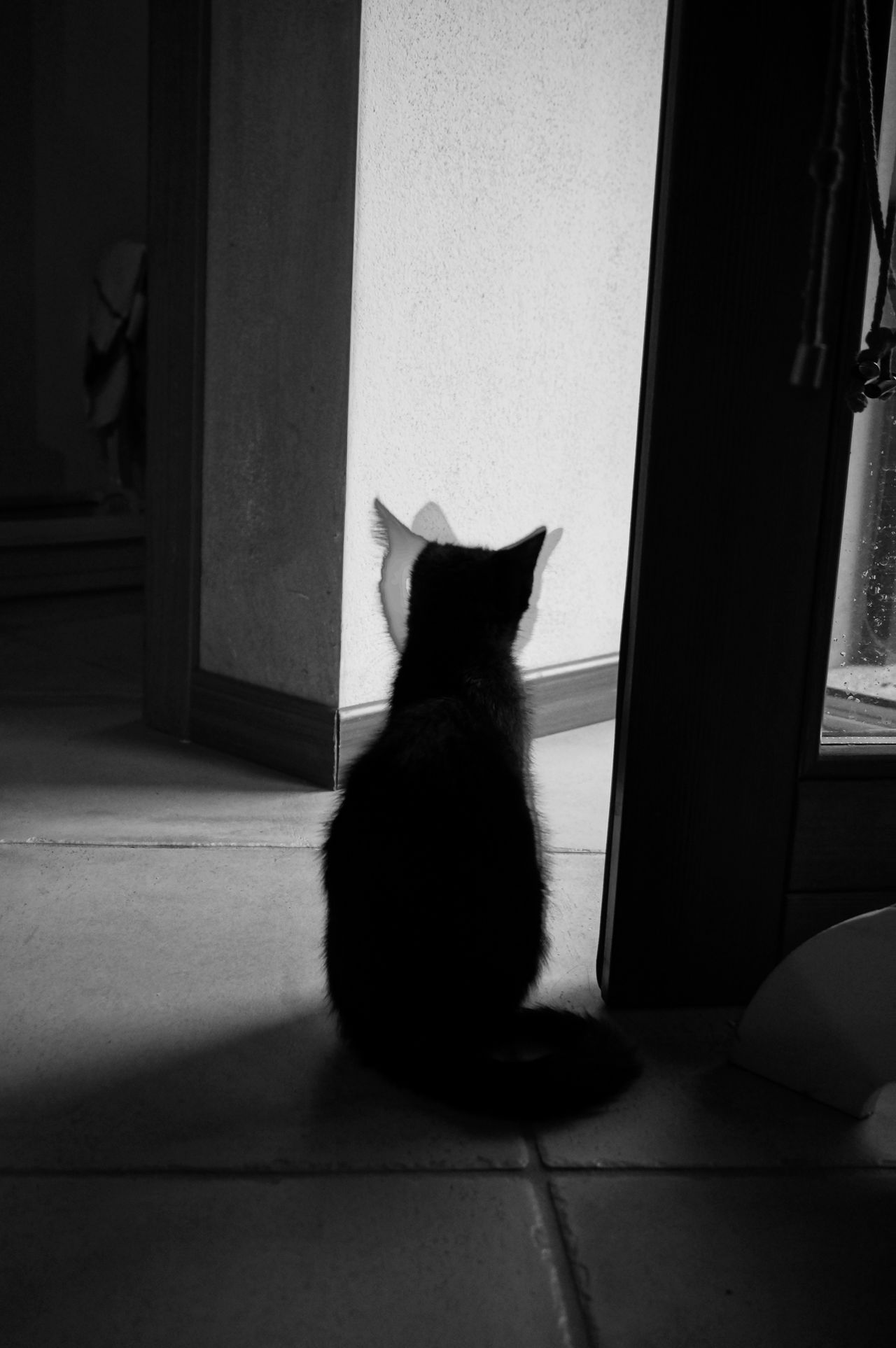 Observe . Domestic Cat Pets Domestic Animals One Animal Sitting Animal Themes Indoors  Door Feline Portrait Full Length Home Interior Black And White Photography Bnwpictures Black & White Photography Light Shadow Cat