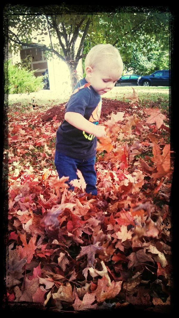 In My Back Yard  Fall Leaves Oh, To Be Young Joy
