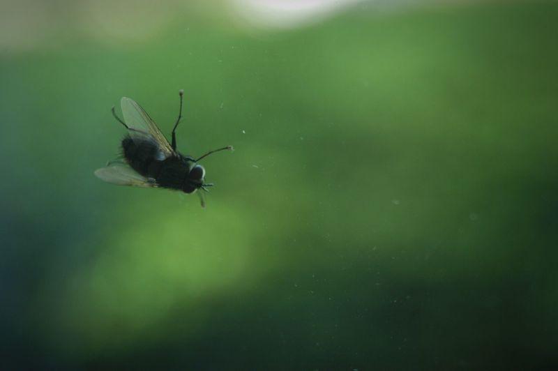 一難去ってまた一難、的な。。。(~_~;) Nature 蠅 Fly Color Palette
