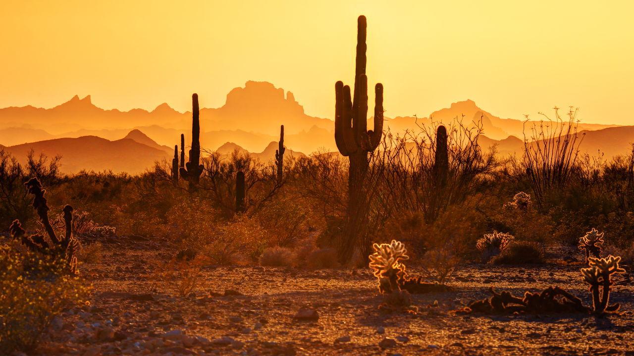 Beautiful stock photos of wüste, Arid Climate, Arizona, Cactus, Clear Sky