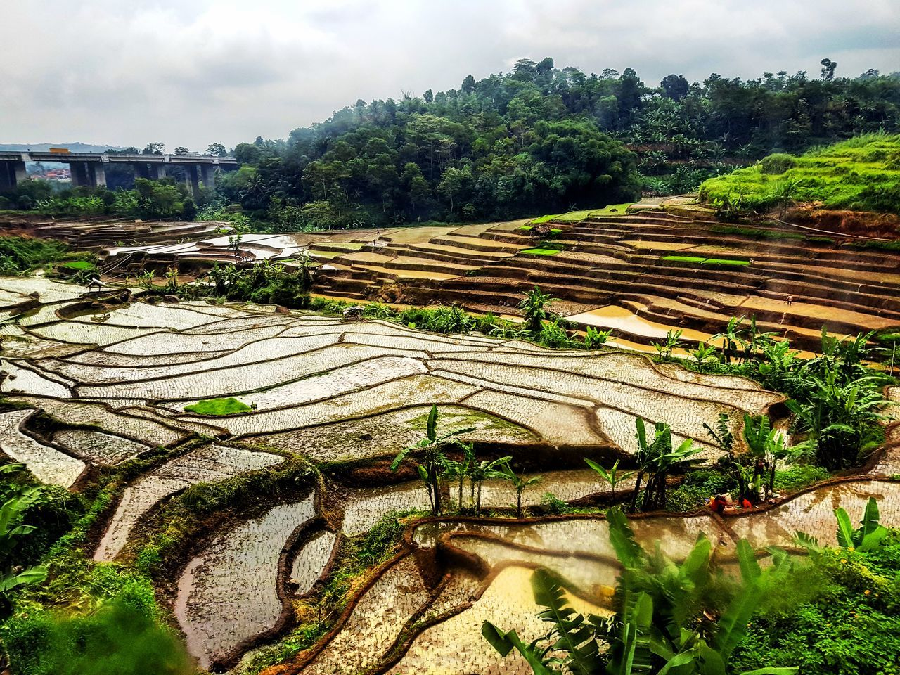 Agriculture Field No People Rice Field Rice Terraces Journey Wanderlust Indonesia_photography Travel Destinations Italianphotographer INDONESIA The Great Outdoors - 2017 EyeEm Awards