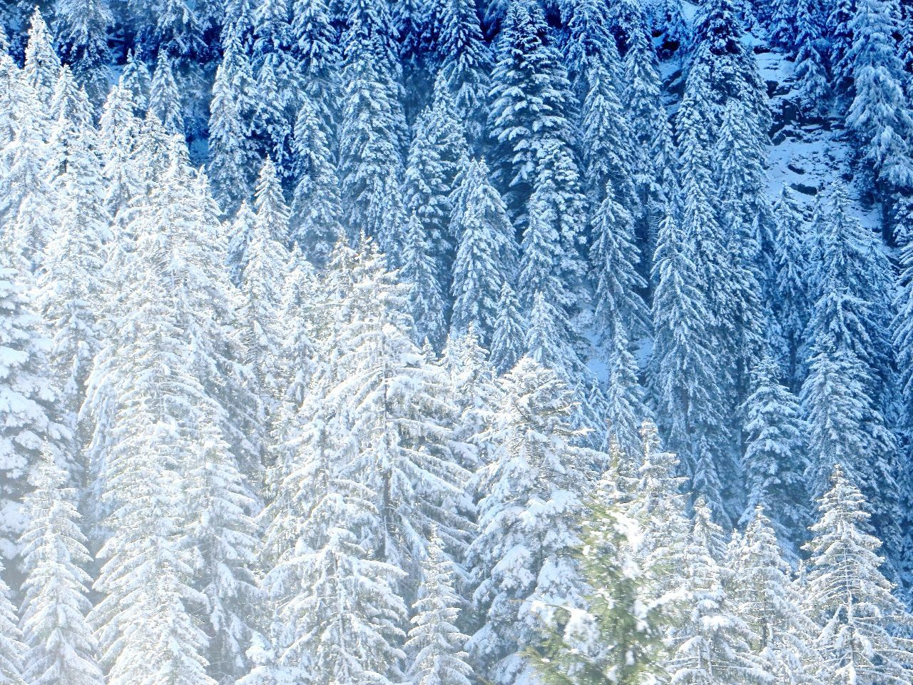 winter, snow, cold temperature, ice, snowflake, backgrounds, window, weather, ice crystal, no people, full frame, nature, christmas, frozen, frost, blue, spruce tree, day, beauty in nature, tree, outdoors, close-up