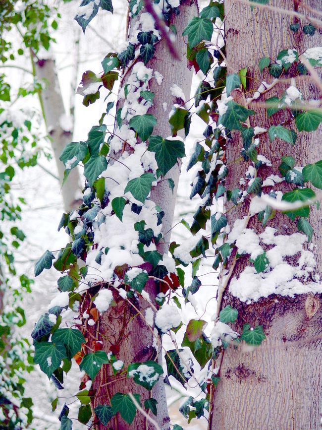 Gartenstadt Falkenberg in Berlin, Germany | Abundance Berlin Botany Branch Change Fragility Freshness Garden Gartenstadt Falkenberg Germany Green Growing Growth Leaf Plant Showcase: February Stem Top Perspective