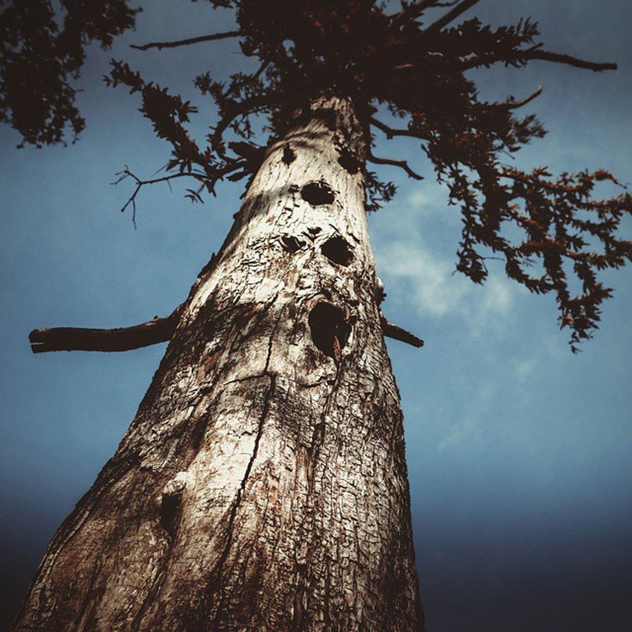 Мне не кажется! Это дерево поёт. О чем поют деревья?💨🌳 (болотныекипарисы на озере в пос. Сукко ) Wigandt_photo Wigandtphoto Wigandt Sonyalpha Minolta Russia Россия Анапа Anapa Photorussia TravellingRussia тотем