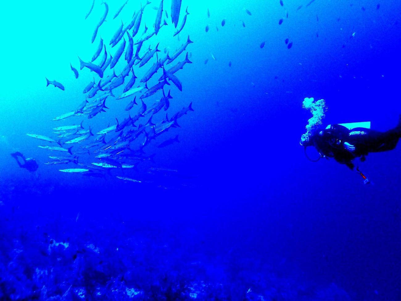 Deep Blue! ⛵️⚓️⚓️⛵️ That's Me Scuba Diving Divelandscape Rajaampat Barracuda school Blue Wave