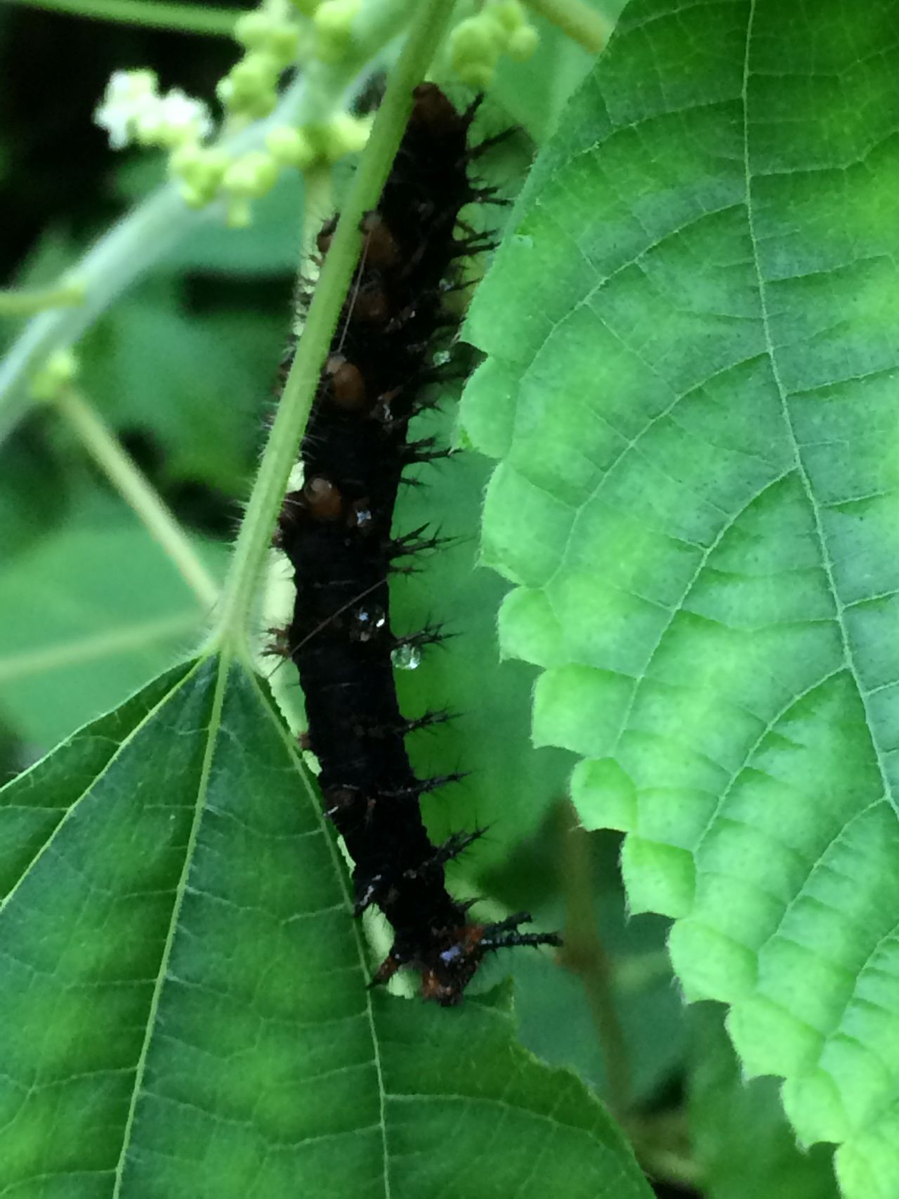 Caterpillar Leaf Insect Animal Themes Green Color Close-up One Animal Growth Plant Leaf Vein Nature Focus On Foreground Beauty In Nature Tranquility Day Outdoors Leaves Freshness Full Frame Green