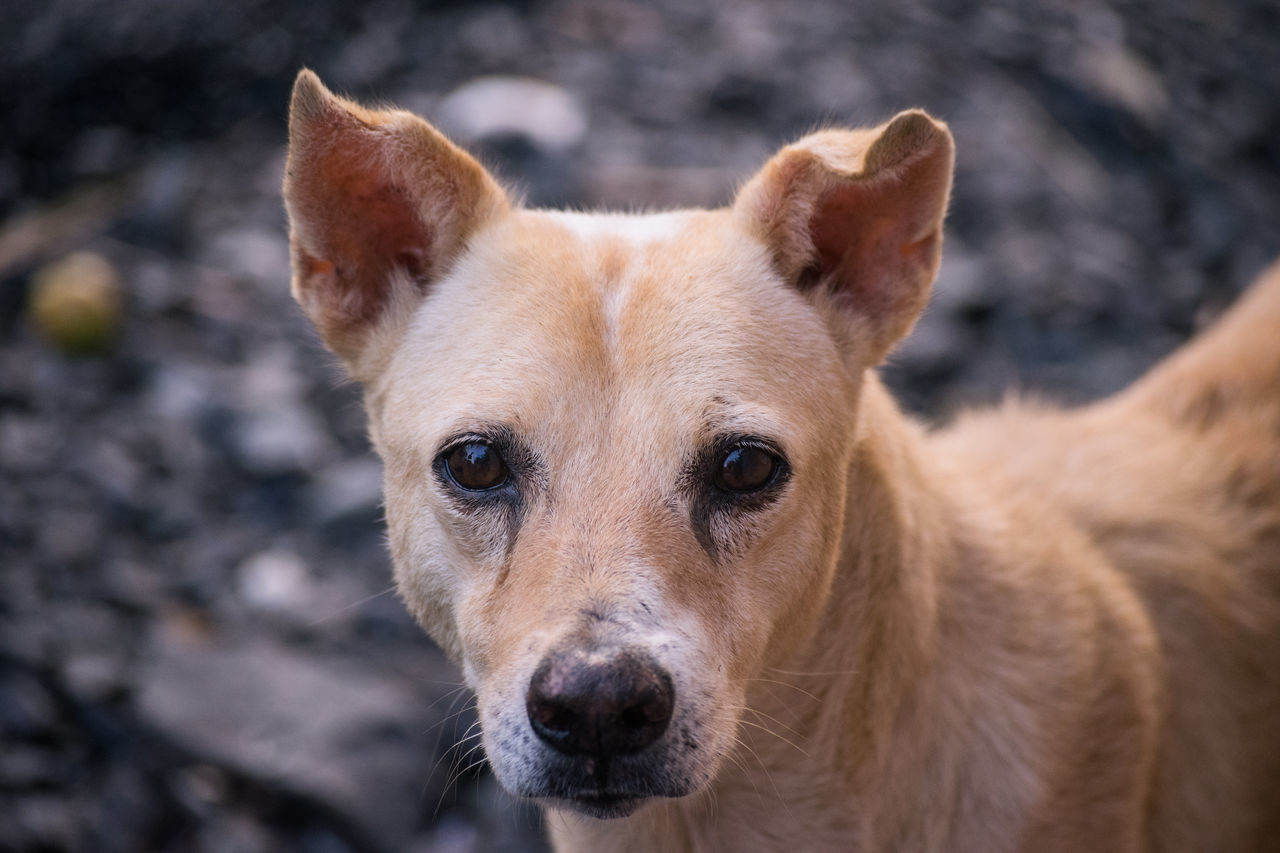 Animal Themes Bow Bow Bow Close-up Cute Dog  Cute Pets Day Dog Dogs Domestic Animals Focus On Foreground Hello World Hi Looking At Camera Looking At Camera Mammal Nature No People One Animal Outdoors Pets Portrait Serious Seriousface Wild EyeEmNewHere