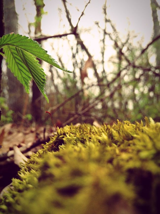 Moss Forest Woods EyeEm Best Shots - Nature EyeEm Nature Lover Adventure Hiking Forestwalk EyeEm Gallery Taking Photos Bugslife Imagination Storytelling Plant Nature Outdoor Photography Hidden Beauty Over Looked Life EyeEm Masterclass Hello World My Point Of View