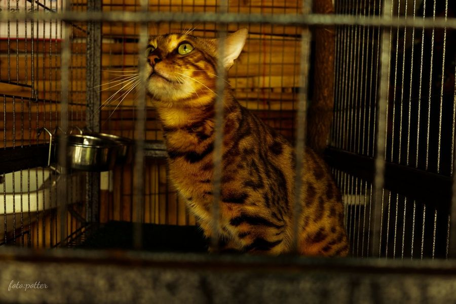 One Animal Cage Animal Themes Animals In Captivity No People Domestic Animals Mammal Pets Birdcage Bird Indoors  Feline Close-up Nature Day Beauty In Nature Reflection Zinnia  Looking At Camera