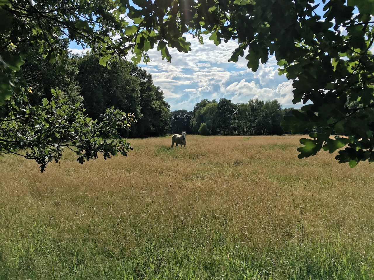 tree, nature, mammal, animal themes, field, one animal, grass, growth, domestic animals, landscape, plant, no people, day, outdoors, beauty in nature, sky