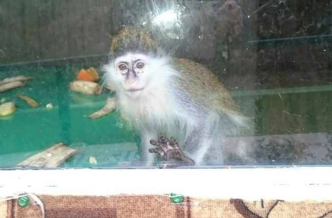 Zoo Animals  Manky