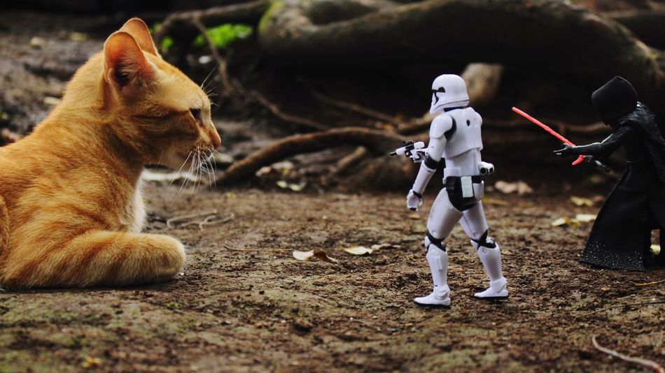 One cat and two action figure