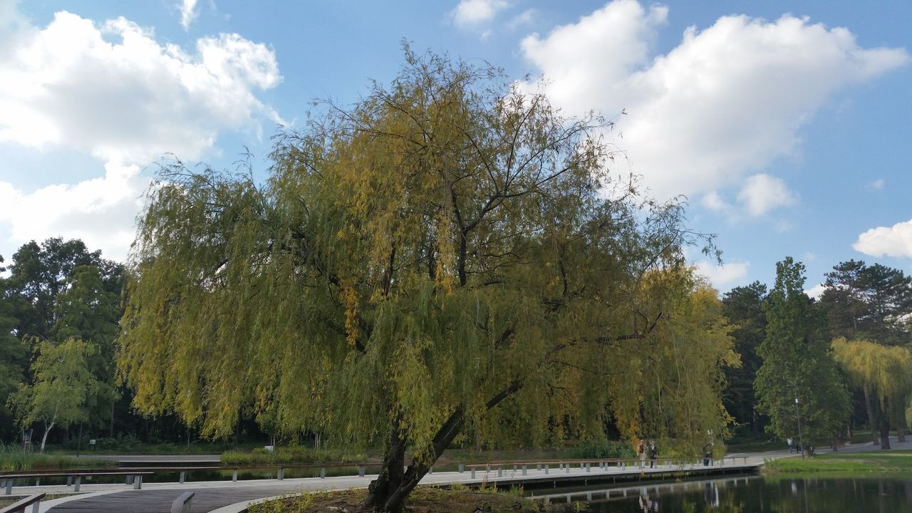 tree, sky, cloud - sky, growth, day, nature, no people, outdoors, tranquility, water, beauty in nature, scenics, branch