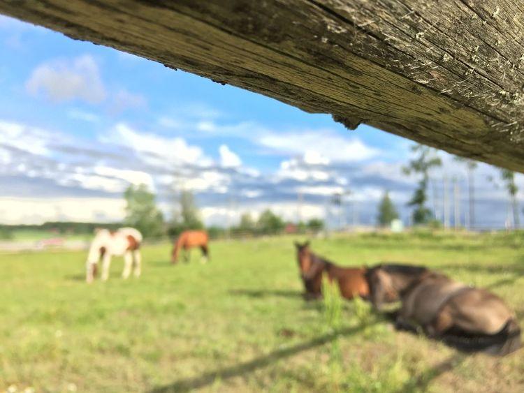 Glitch No Edits No Filters The Purist (no Edit, No Filter) Horses Focus