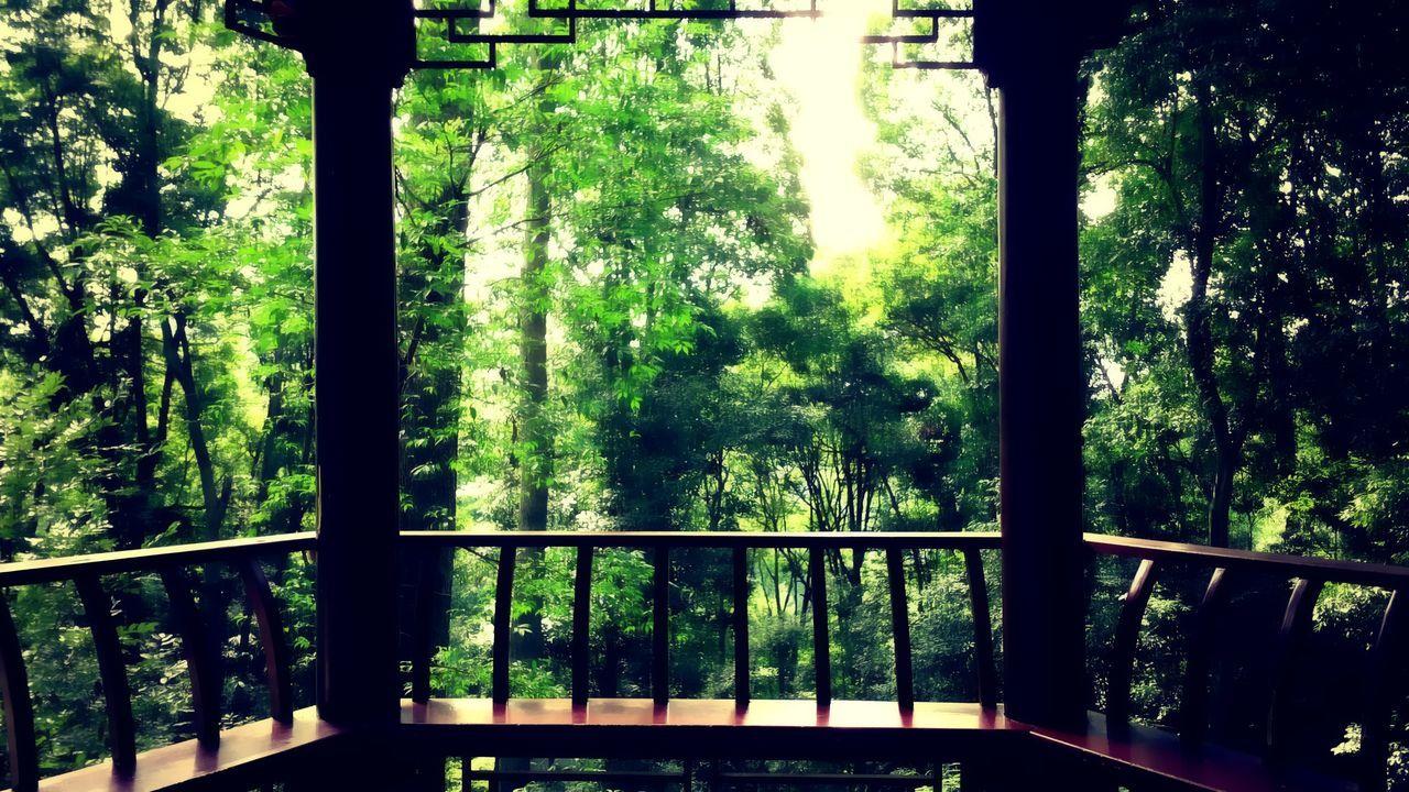 中国 China Sichuan Province Chengdu Nature No People Nobody Shoot Your Life Outdoors Beauty Natural Beauty Beautiful Tree Green Color Beauty In Nature Dream Real My Year My View Still Life