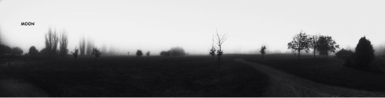 What Lies Beyond... Fortheloveofblackandwhite Landscape Trees TreePorn Landscape_Collection Blackandwhite EyeEm Best Shots Foggy Tadaa Community