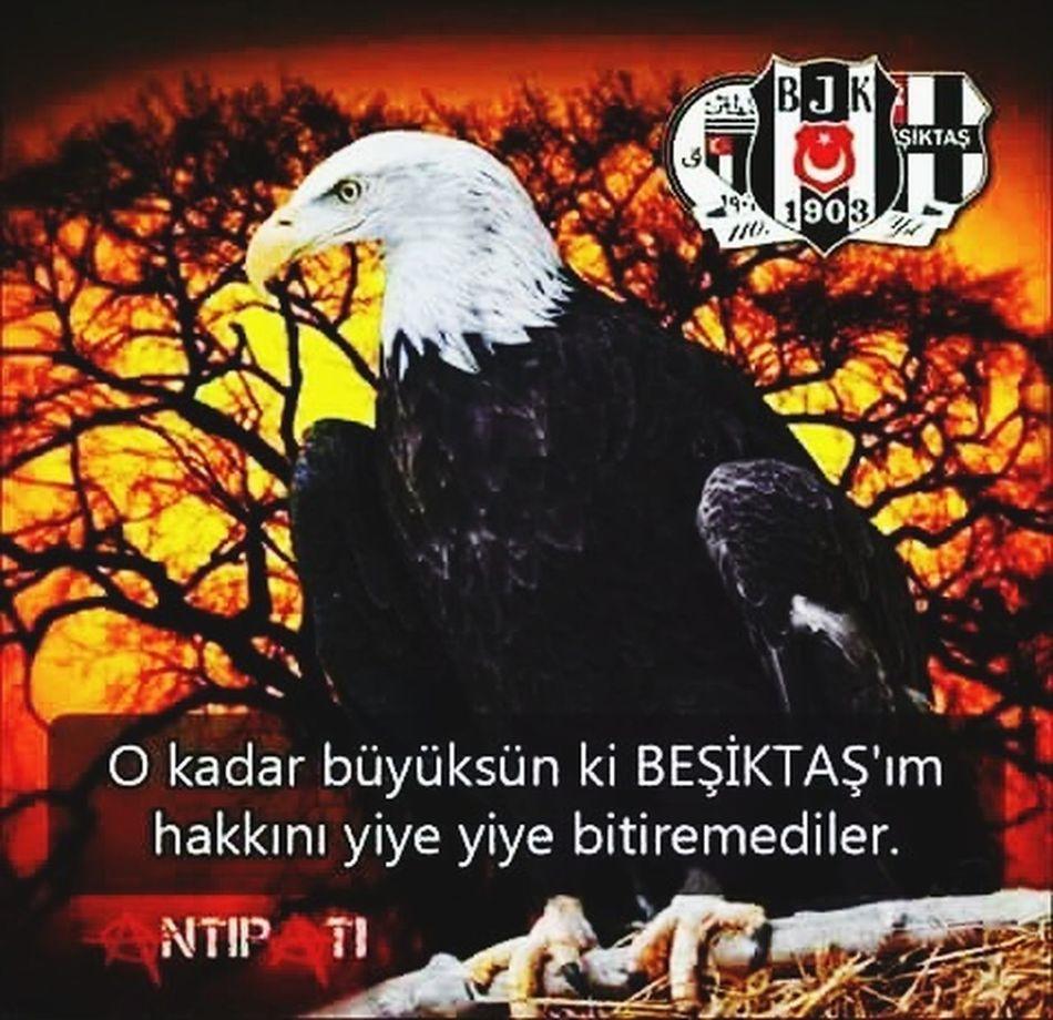 Beşiktaş..... First Eyeem Photo