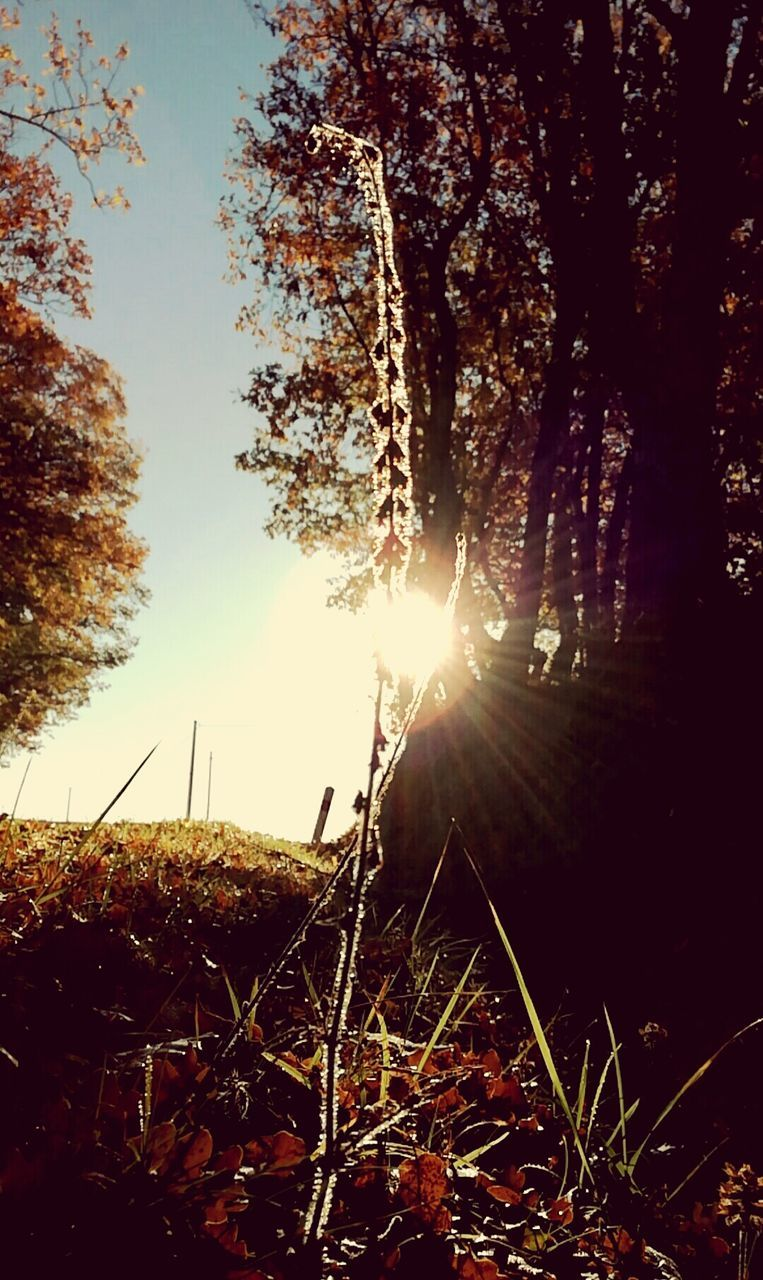 sun, sunbeam, tree, lens flare, sunlight, nature, growth, beauty in nature, field, tranquility, tranquil scene, outdoors, no people, scenics, sky, grass, landscape, sunset, day