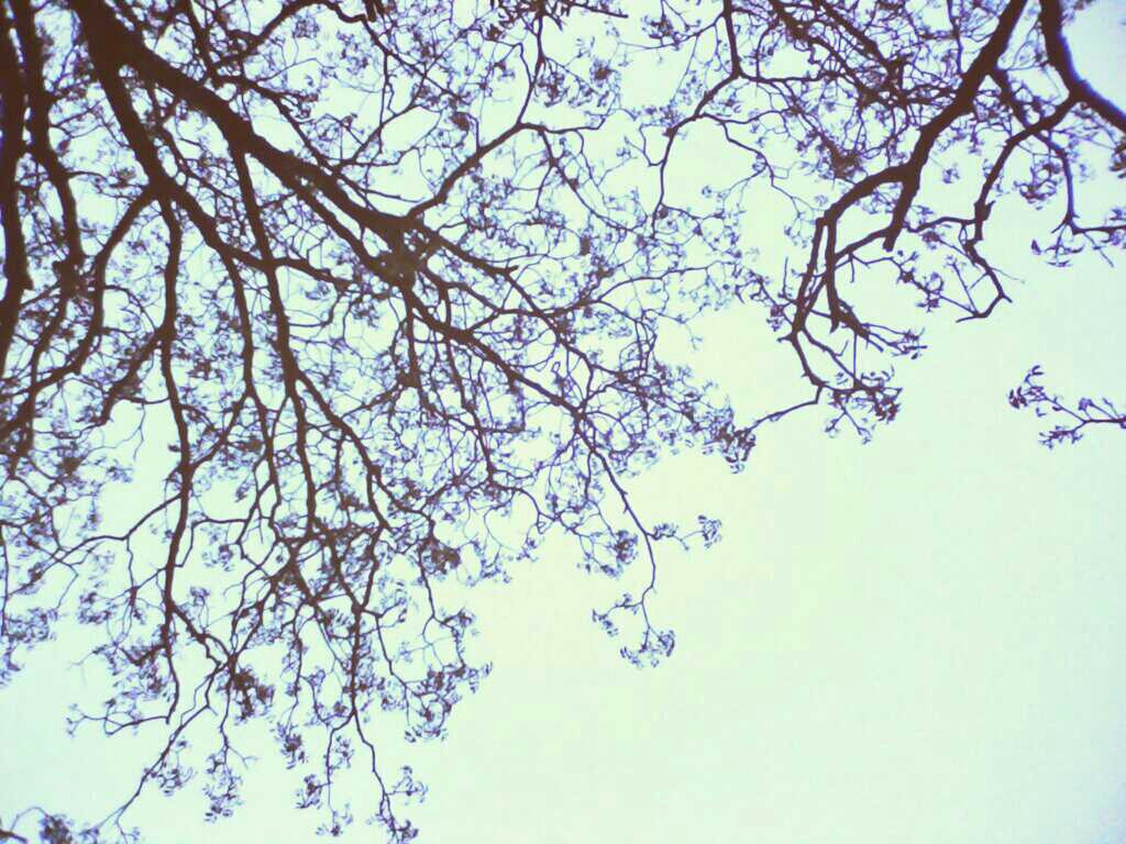 tree, low angle view, branch, clear sky, growth, nature, beauty in nature, blue, tranquility, sky, bare tree, copy space, day, outdoors, no people, high section, scenics, leaf, tranquil scene, silhouette