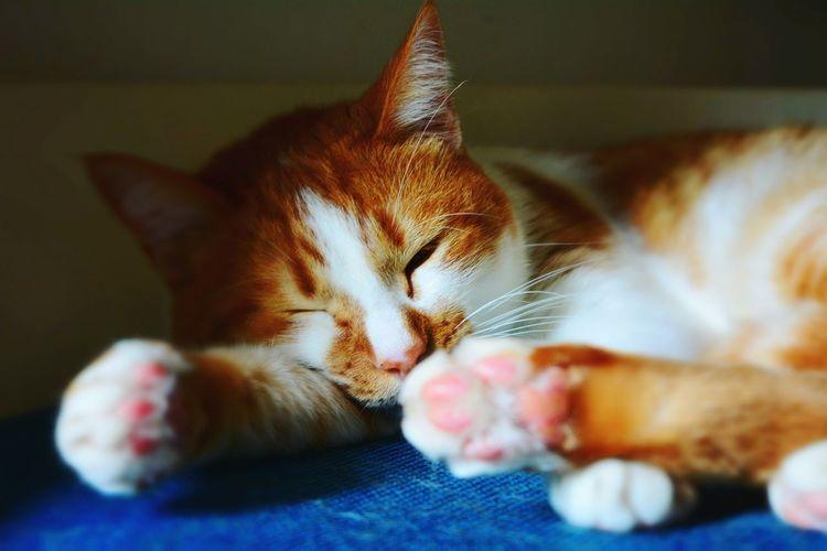Kitty Mel Gibson