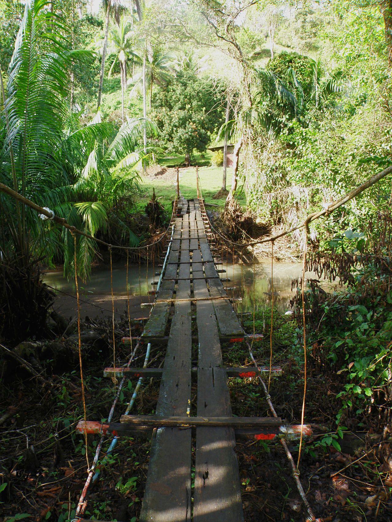 Beautiful stock photos of jungle, Branch, Bridge - Man Made Structure, Day, Footbridge