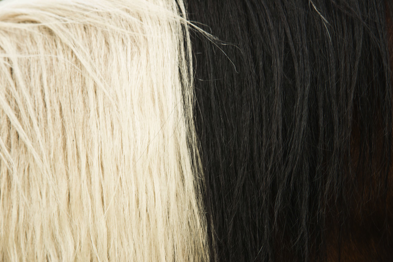 Background Backgrounds Blackandwhite Close-up Full Frame Horse Hair Horse Mane Nature No People Outdoors