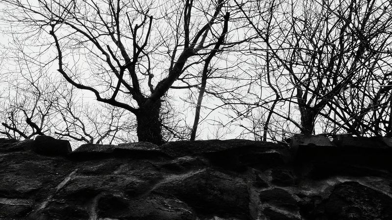Blackandwhite Monochrome Tree Sky Nature Branch Low Angle View Outdoors Bare Tree Beauty In Nature It Is Cold Outside Tree_collection  The Places I've Been And The Things I've Seen Cold Weather How Is The Weather Today? December2016 Autumn 2016 Tree Freshness Beauty In Nature Wall