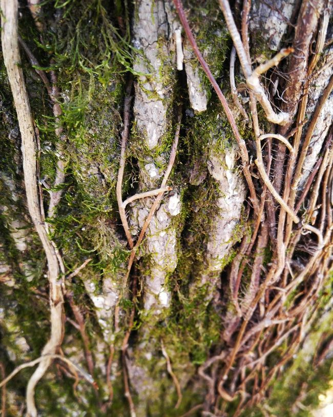 Relaxing Wildlife Adventure Outdoors Beautiful Amazing Plants Macrophotography Hiking Tree Trunk Treebark Tree Forest Wood Growing Treemoss