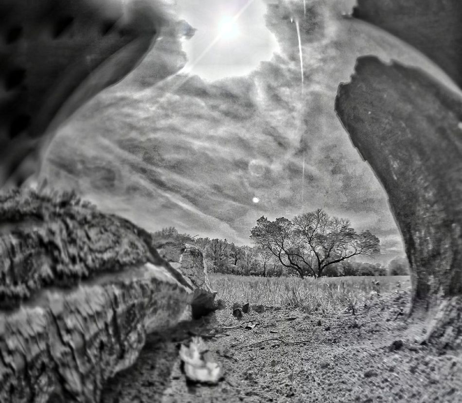 Sun. Spring. Black And White Lines Curves dead LINE Fish Eye Flare Lonely Effect Spring Drunk Missouri Edit Effect Here Mo Columbia Lonely 2017 Life Wilson  Life Fisheye Selective Focus Lens Baby flare sun Sun Art Is Everywhere TCPM