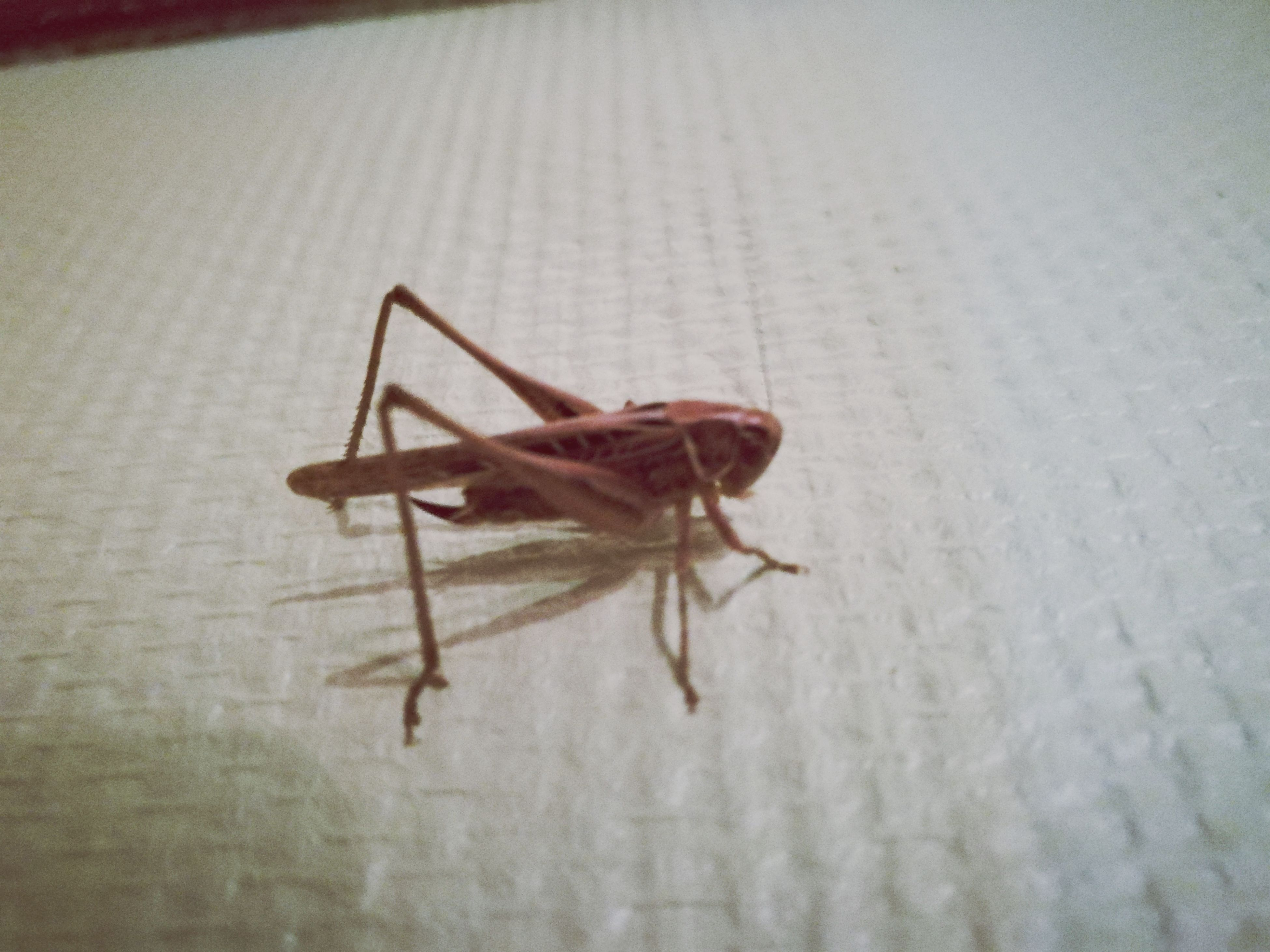 animal themes, insect, animals in the wild, one animal, close-up, no people, animal wildlife, day, indoors