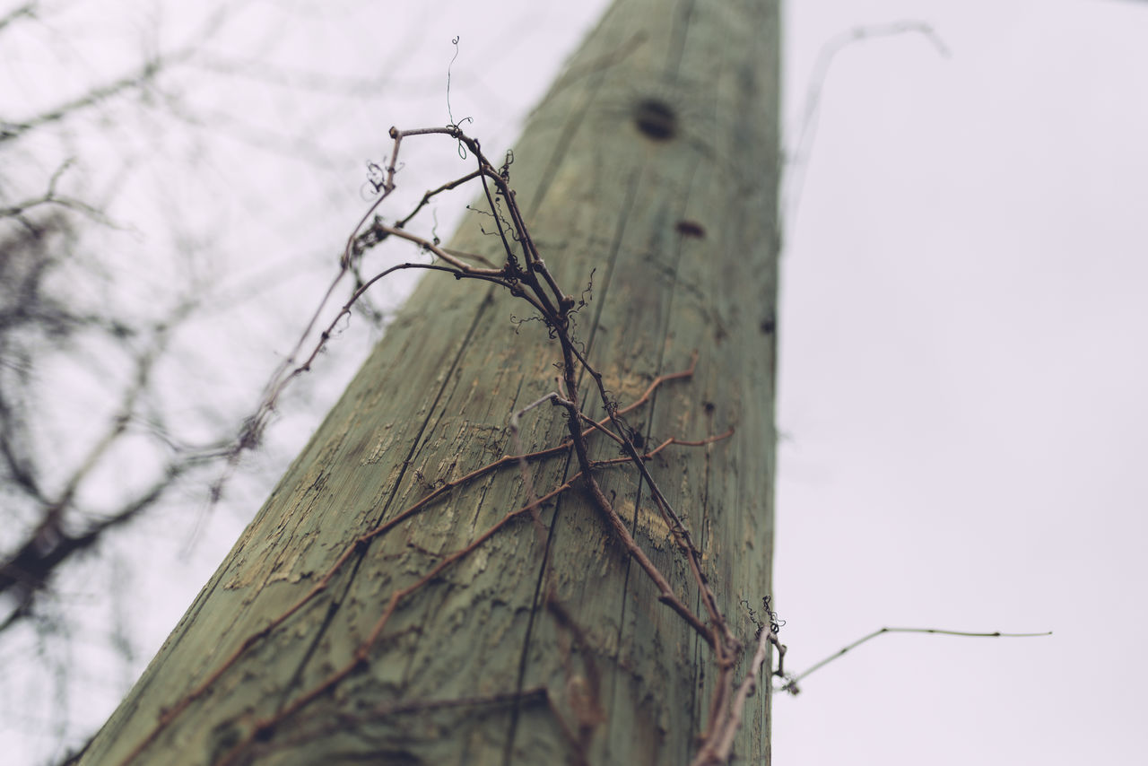 Beauty In Nature Branch Close-up Day Dead Plant Growth Low Angle View Nature No People Outdoors Pole Selective Focus Tree