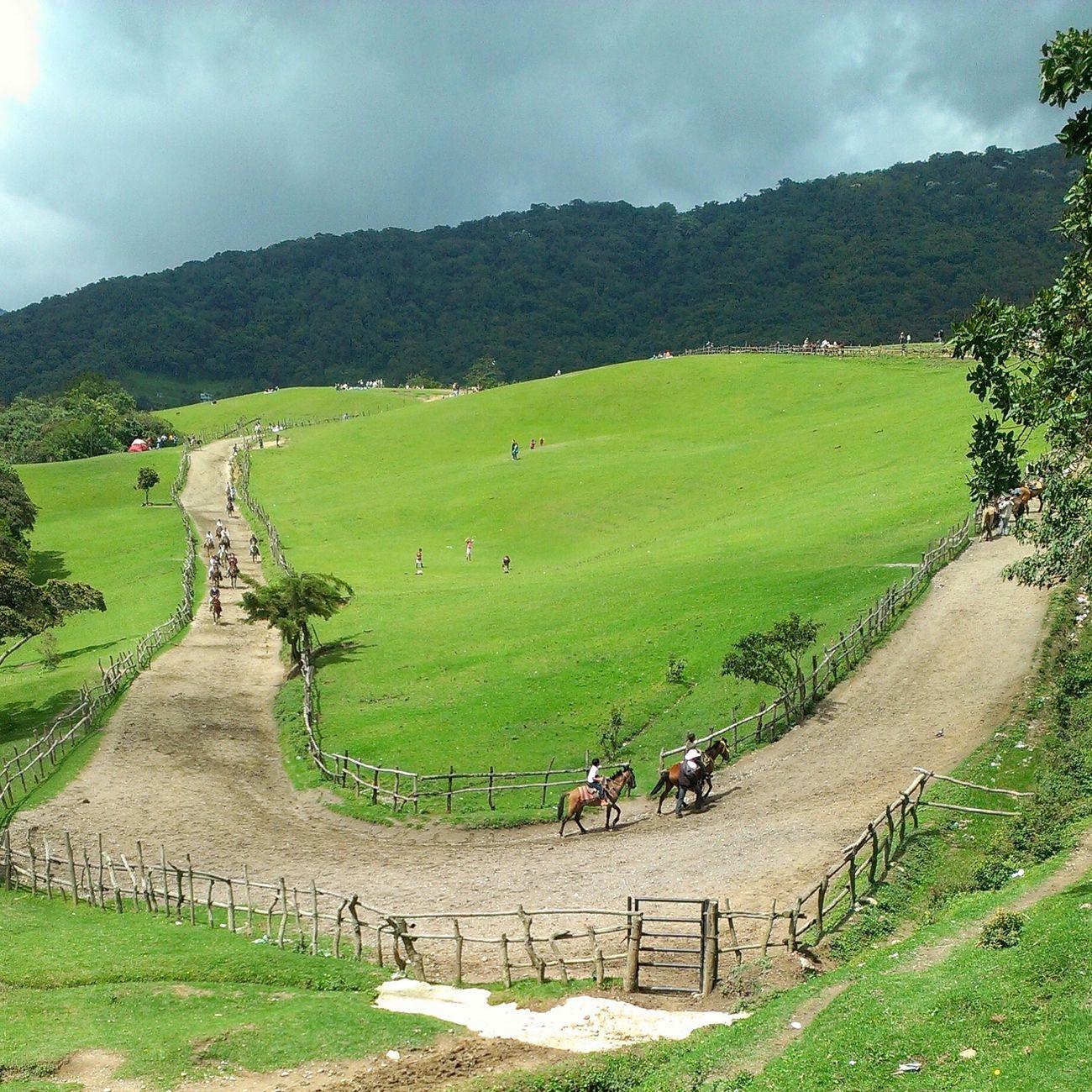 La belleza de la naturaleza. Horse Caballos Venezuela Venezuelan Belleza Beautiful