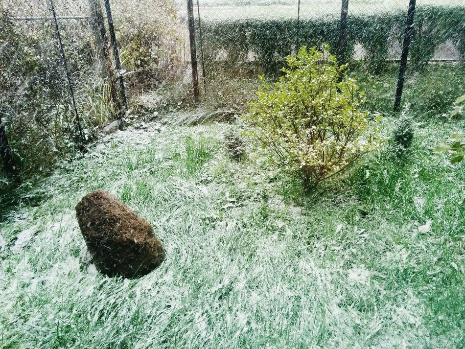 Autumn Snow Snow Day Snow In October Green How's The Weather Today? Cold Weather