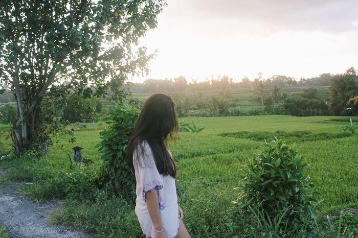 Ubud - Bali. Bali Green Scenery Scenery Shots