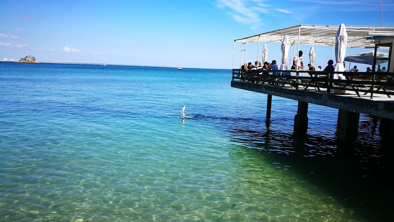 water, bird, animals in the wild, sea, nature, sky, real people, one animal, day, outdoors, animal wildlife, beauty in nature, men, waterfront, women, scenics, swan, large group of people, swimming, pelican, people