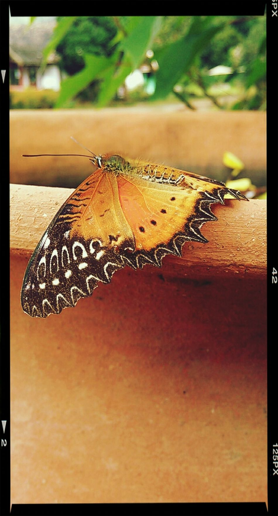 A butterfly on the clay jar Rest Mindfulness Insect Equanimity