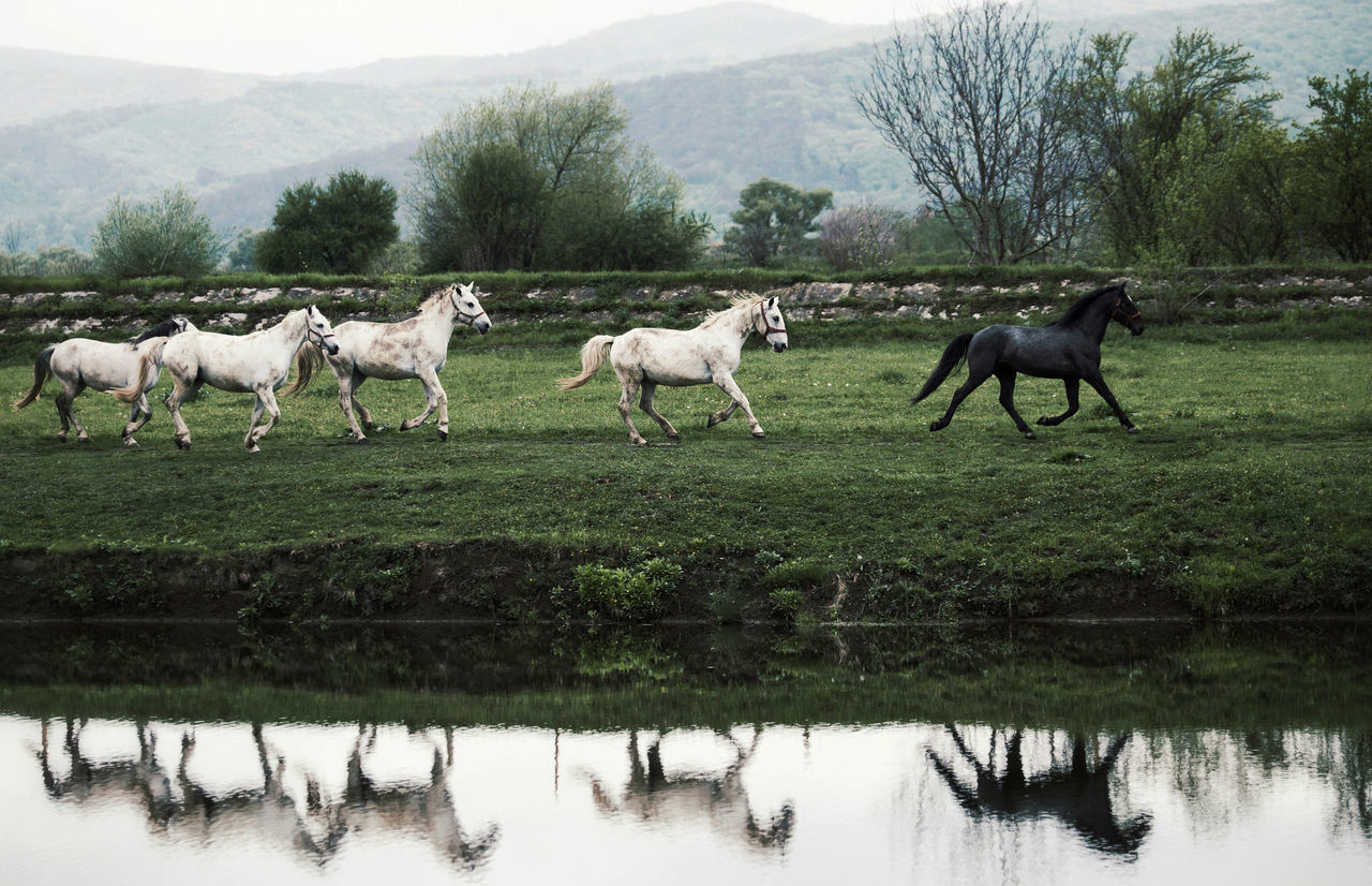 Animal Animal Themes Animals Beauty In Nature Beauty In Nature Day Domestic Animals Field Grass Green Color Horse Horses Lake Landscape Landscape_Collection Livestock Mammal Nature Nature Nature_collection No People Outdoors Sky Tree Water