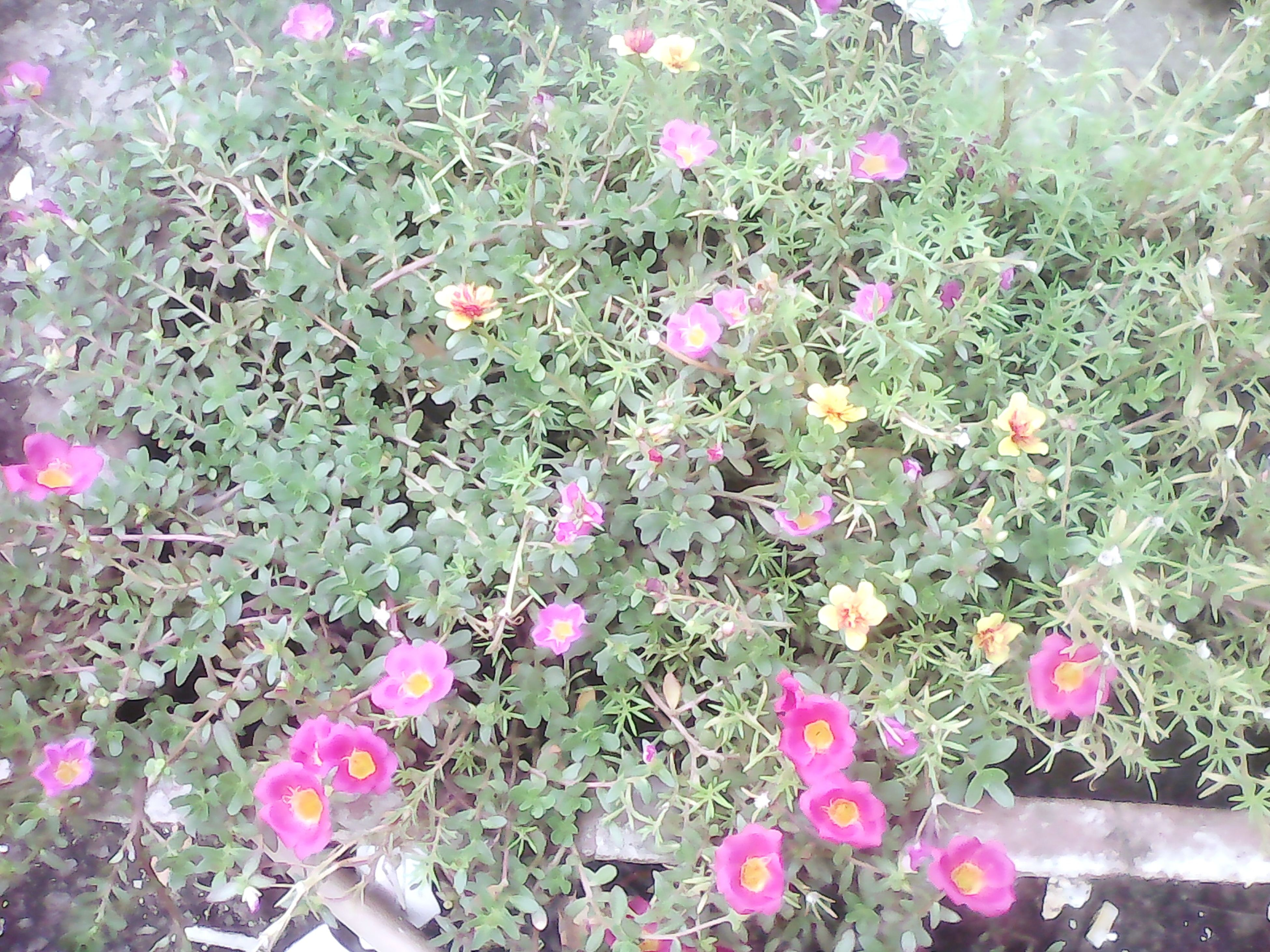 flower, growth, freshness, plant, fragility, beauty in nature, pink color, petal, nature, high angle view, blooming, in bloom, field, day, flower head, outdoors, no people, sunlight, park - man made space, leaf