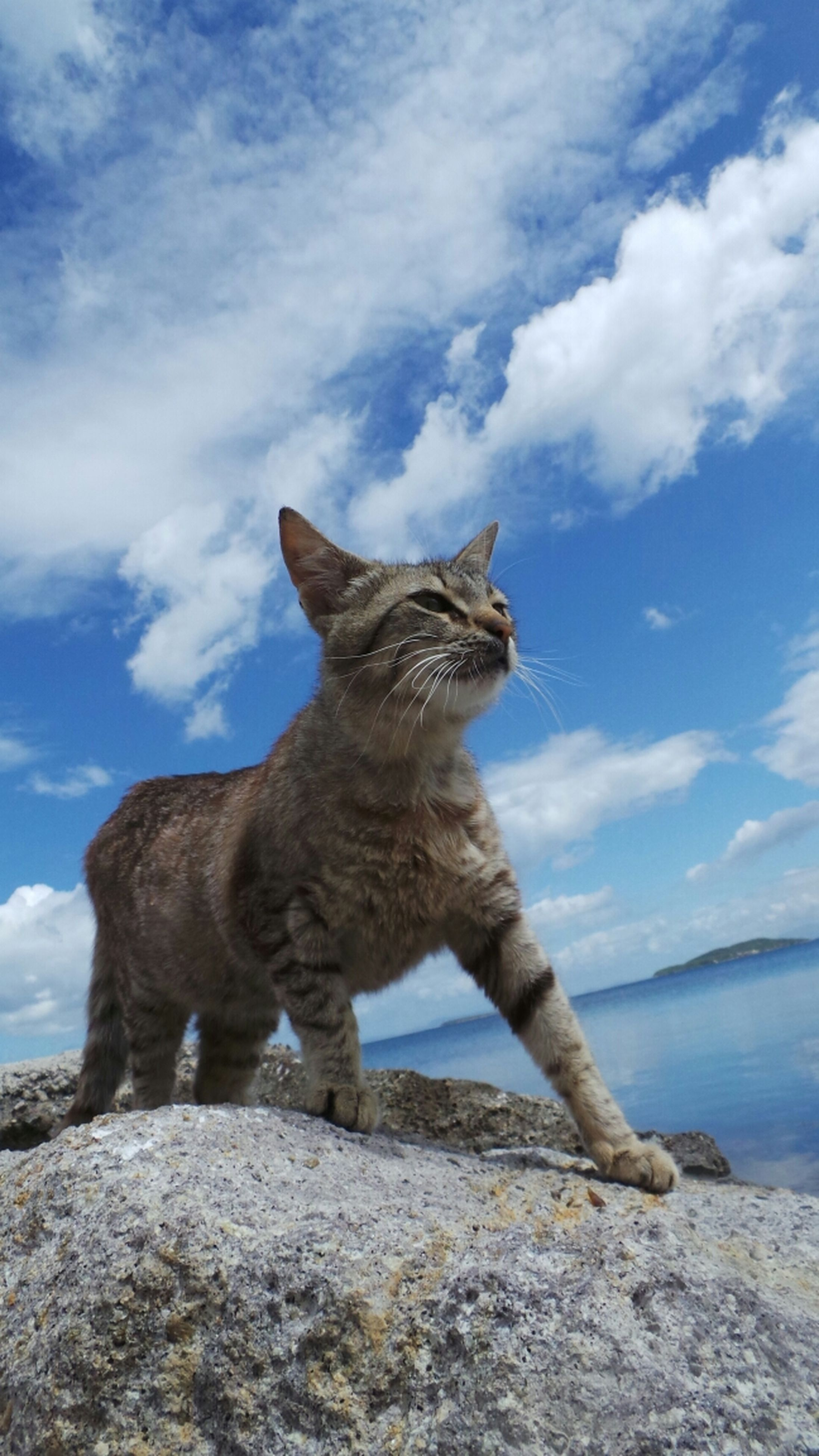 one animal, animal themes, sky, mammal, rock - object, full length, low angle view, cloud - sky, nature, standing, cloud, day, domestic animals, outdoors, no people, rock, sitting, wildlife, pets, animals in the wild