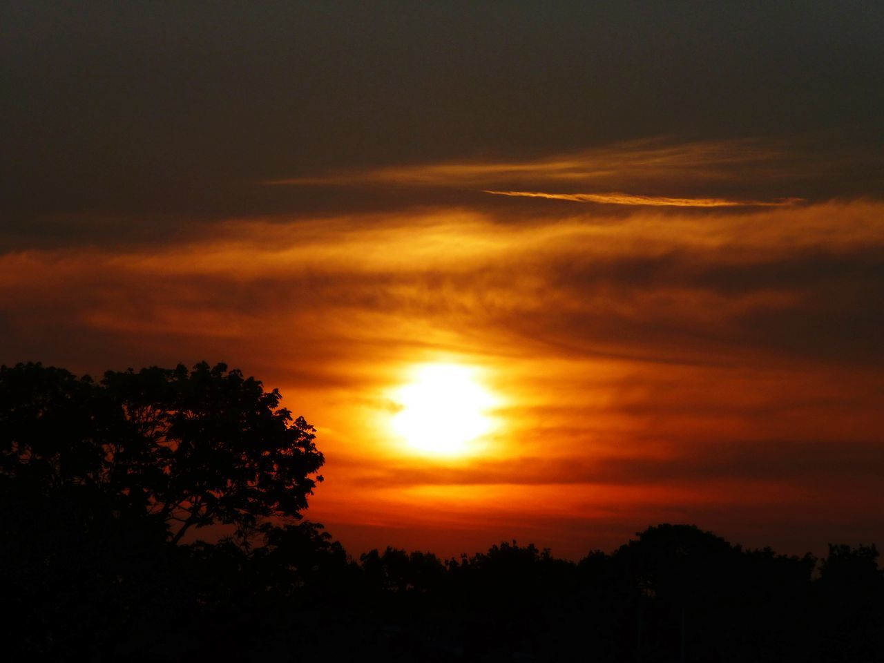 sunset, nature, tree, silhouette, beauty in nature, scenics, sky, tranquility, sun, tranquil scene, no people, growth, outdoors