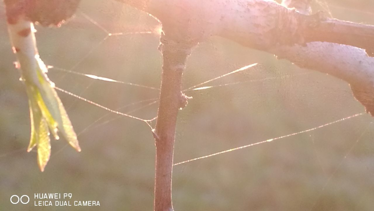 Sundown is painting... Spider Web Nature Outdoors Originalpicture GetbetterwithAlex PalmaDiMaiorca Beauty In Nature