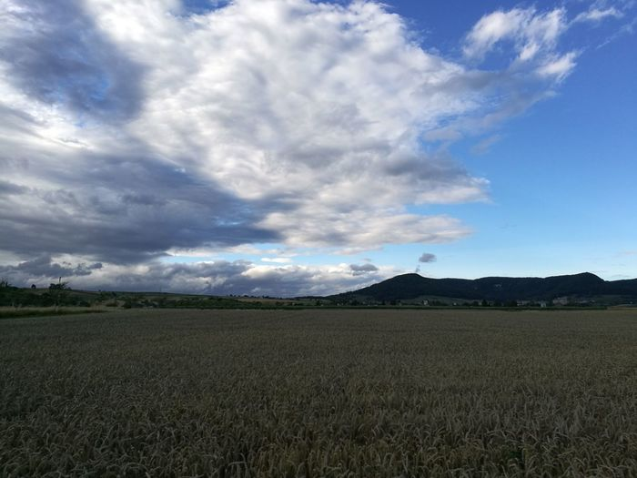 Cloud - Sky Agriculture Field Landscape Rural Scene Nature Scenics Beauty In Nature Outdoors Cereal Plant