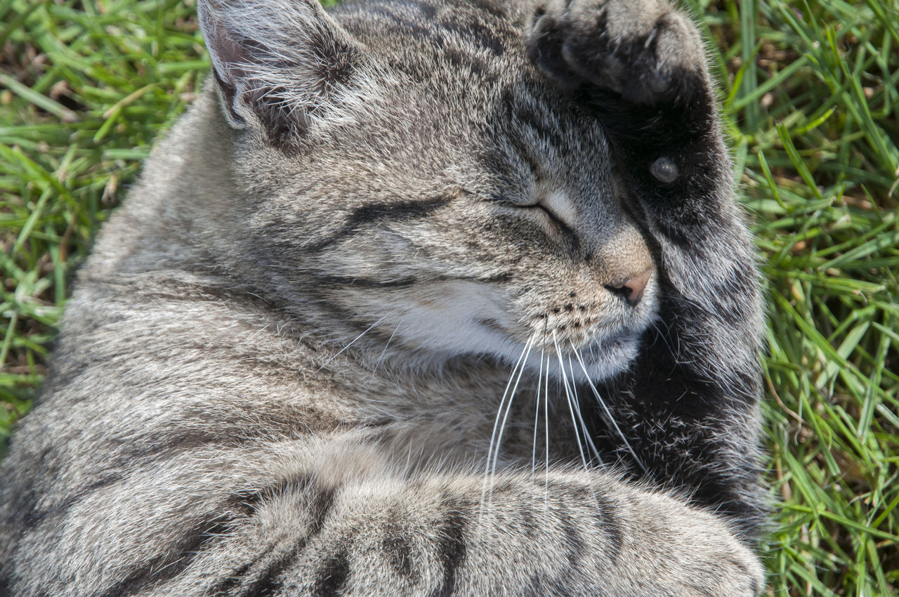 Close-Up Of A Cat With Closed Eyes
