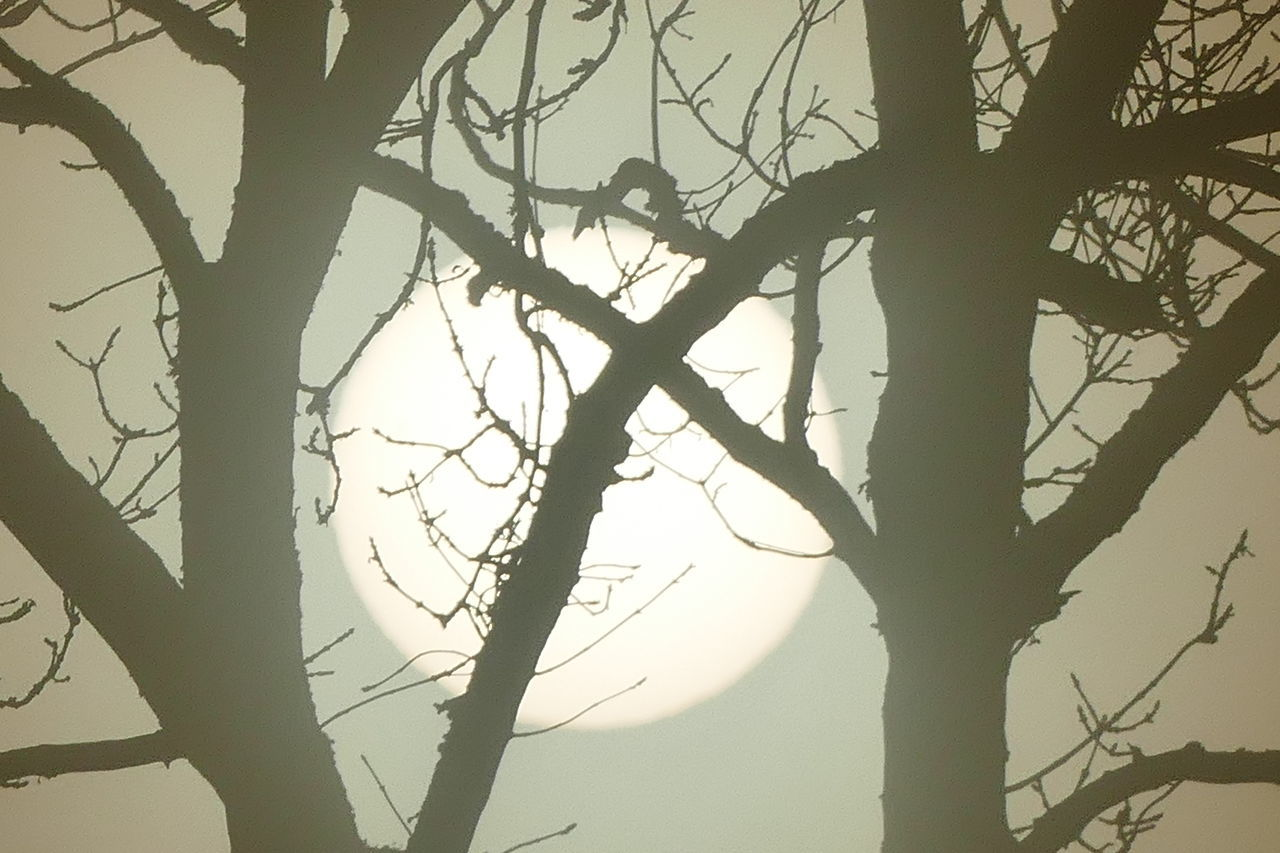Foggy day.. Beauty In Nature Branch Day Dream States Ethereal Fog Foggy Foggy Weather Low Angle View Nature No People Outdoors Silhouette Silhouette_collection Sky Softness Sunset Tranquility Tree