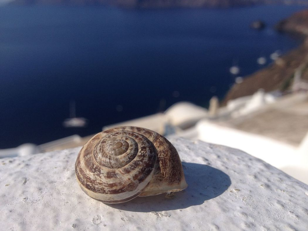 Empty shell, but still alive From Santorini With Love