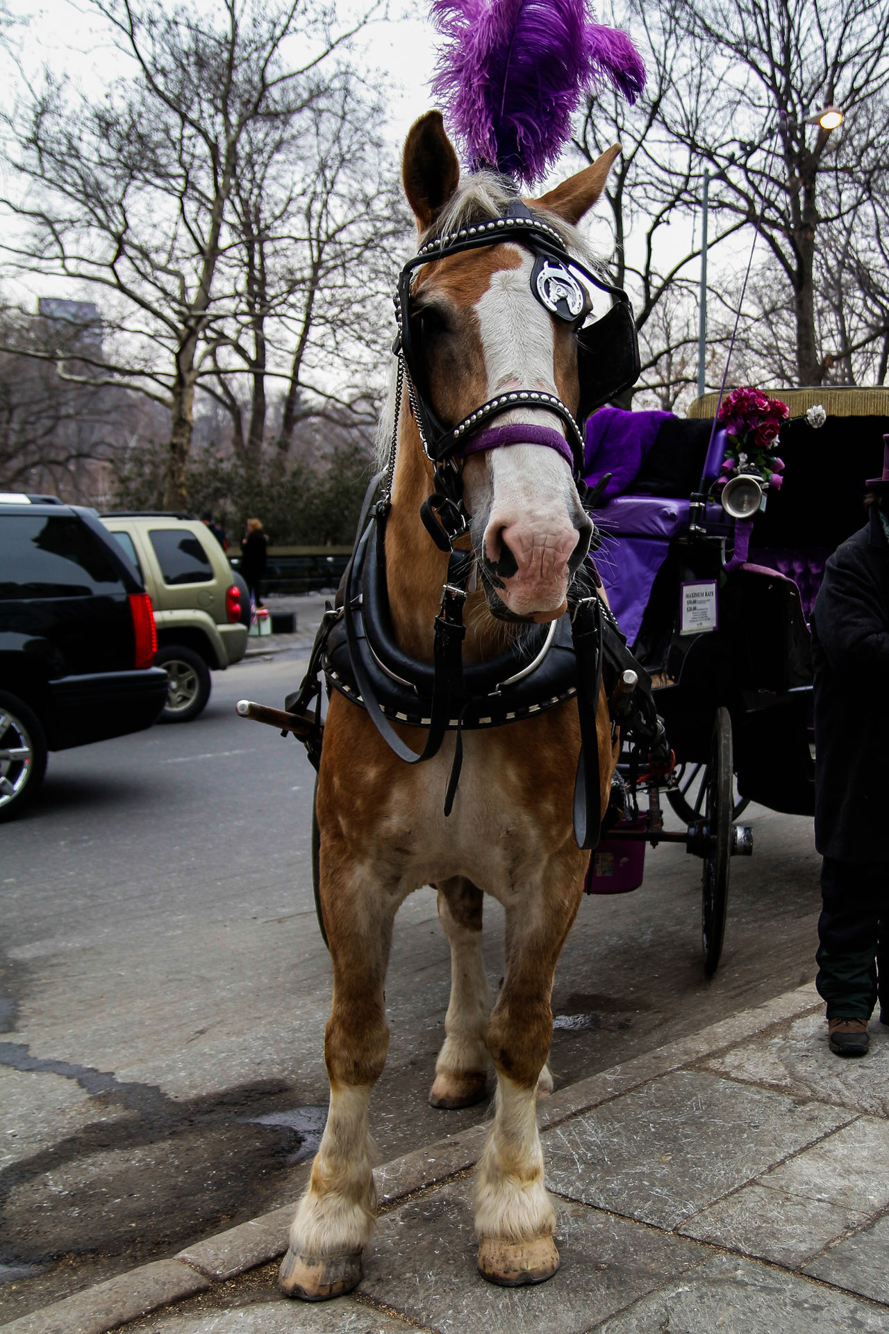 Animal Themes Bridle Central Park - NYC Day Domestic Animals Horse Horse Cart Mammal Mode Of Transport No People NYC One Animal Outdoors Pets Standing Transportation Tree Working Animal