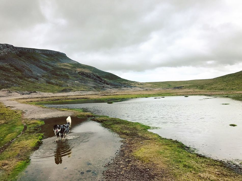 When there is nobody for miles around apart from us and the dog. Remote, wild and invigorating. Animal Themes Sky Scenics Water Mountain One Animal Outdoors Nature Day Tranquil Scene Beauty In Nature Domestic Animals Cloud - Sky Lake Landscape Tounge Out  Border Collie Mammal Yorkshire Dales