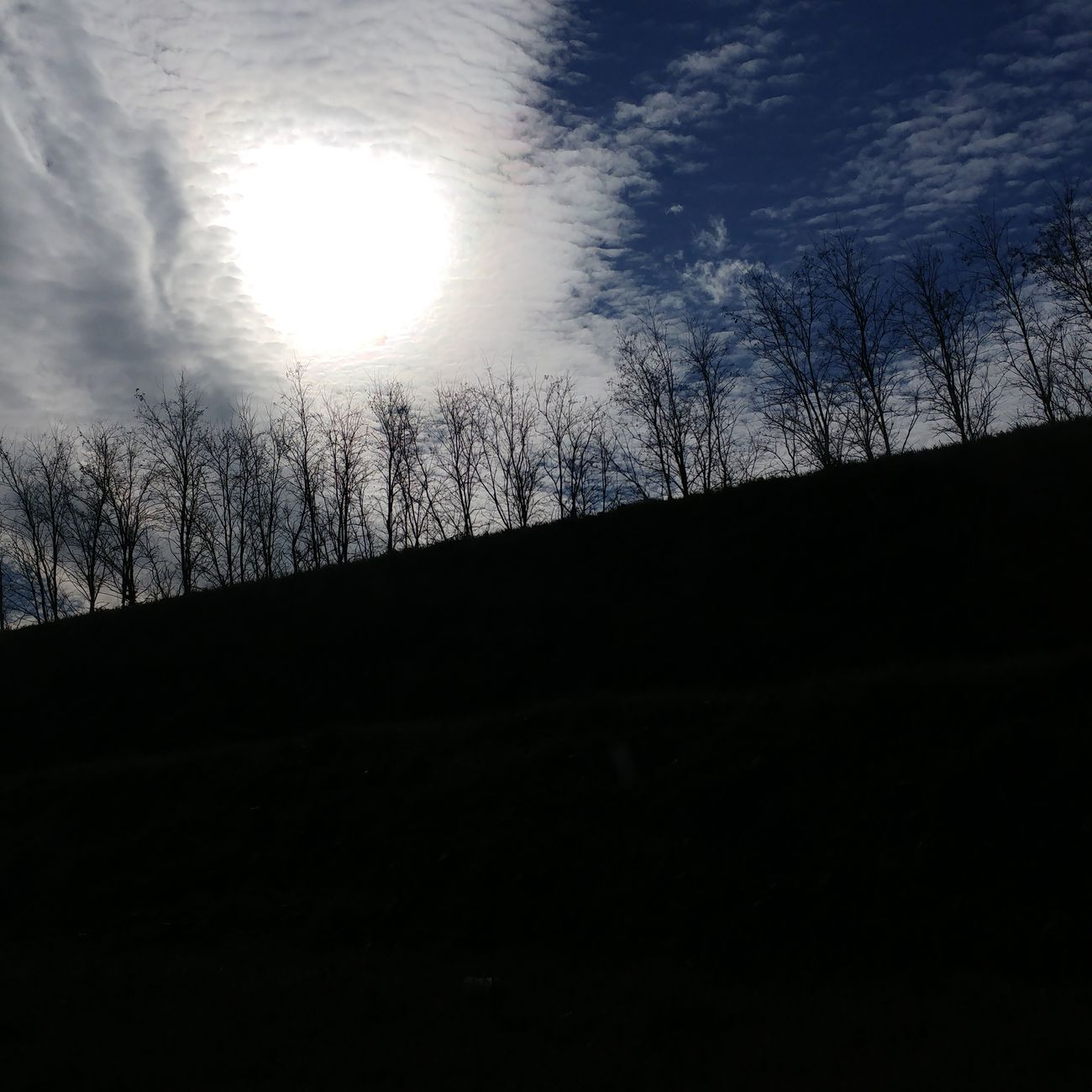 We live to be happy, not to be perfect. Capture Blue Sky White Clouds Bright Sun Trees Dark Roadtrip Inthecar Sunnyday Coldday Winter Trees Winter Landscape Viewfrommycar View Beauty In Nature Nature Mood Photosoftheday All_shots Toscana