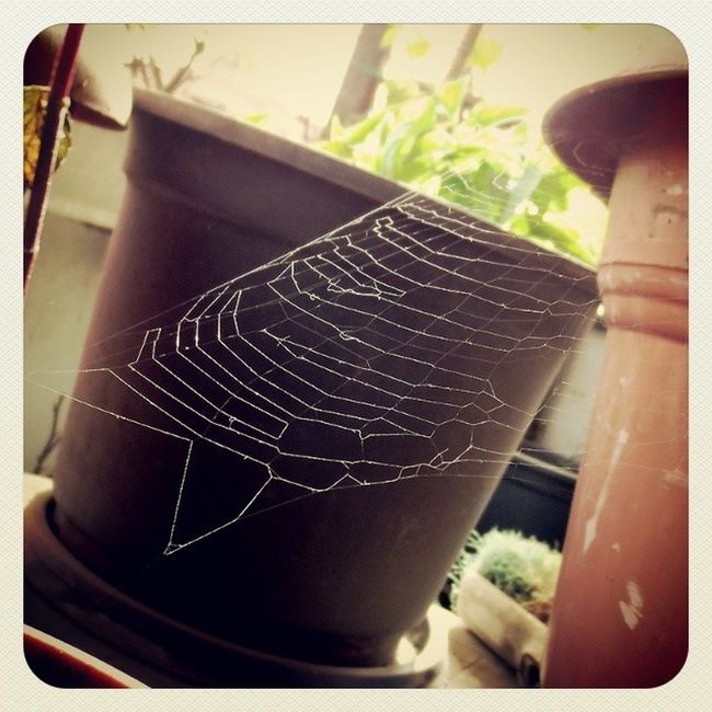 Spider web in my balcony. Spider Silk Spiderweb Web Home Balcony Egypt