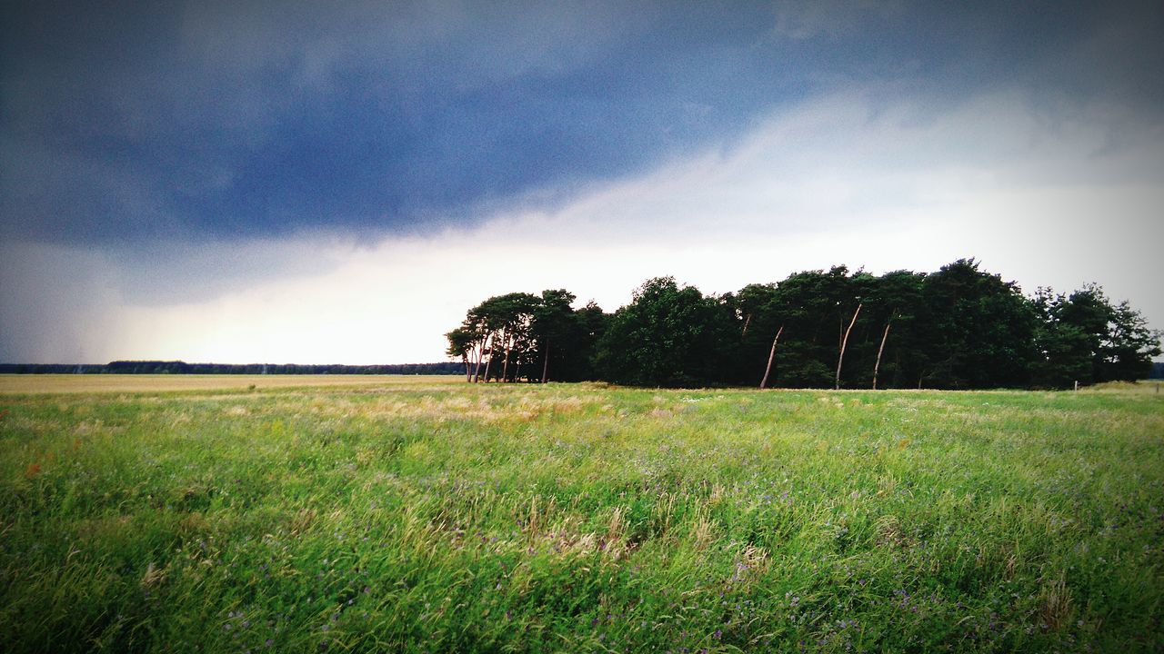 grass, field, landscape, nature, sky, tranquil scene, tranquility, meadow, tree, beauty in nature, no people, scenics, outdoors, day